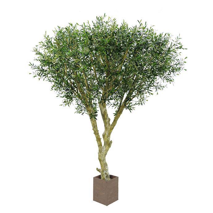 Bespoke-Olive-3-Stem-Tree