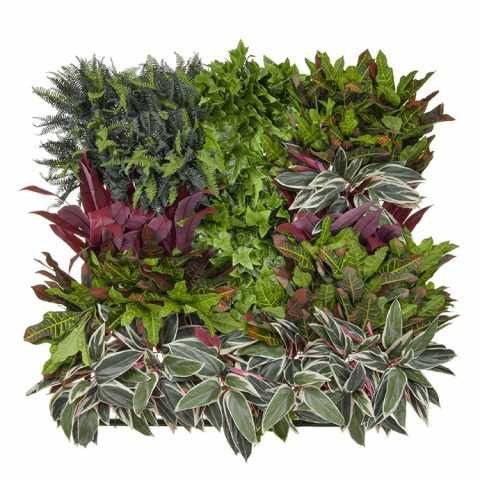 Bespoke Variegated living wall panel