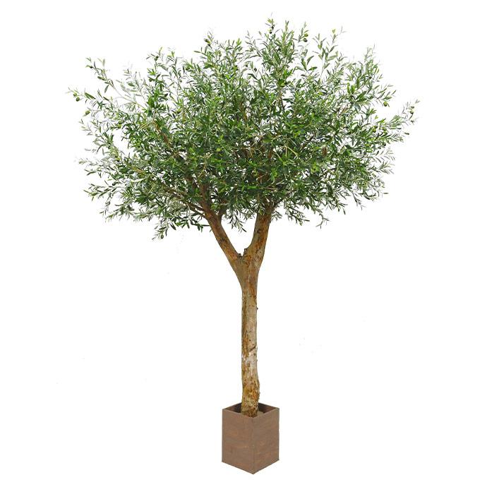 Classic-Bespoke-Olive-Tree