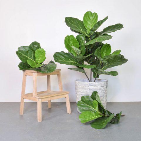 Fiddle-And-Foliage-Bush